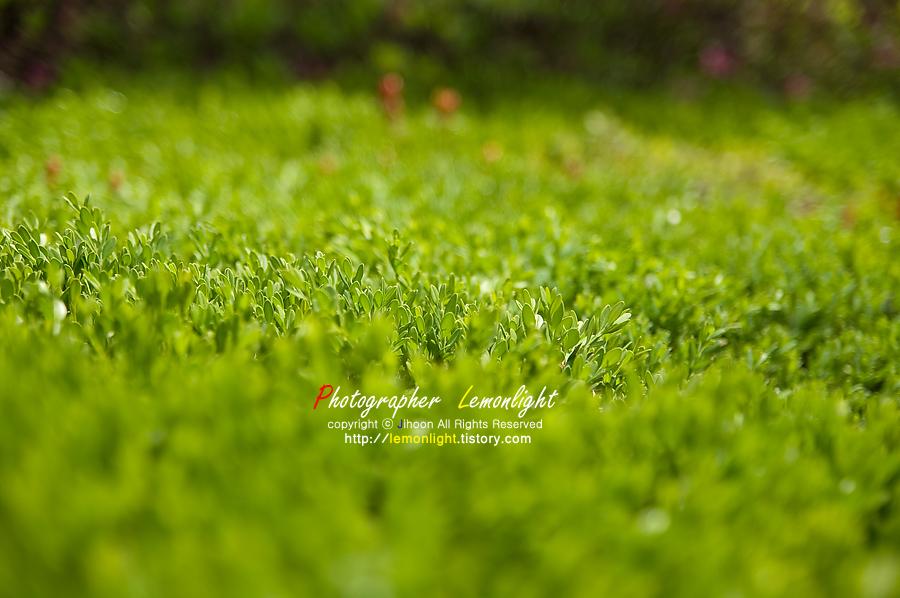봄의 녹색...