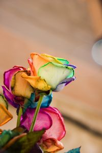 Unique colour rose image